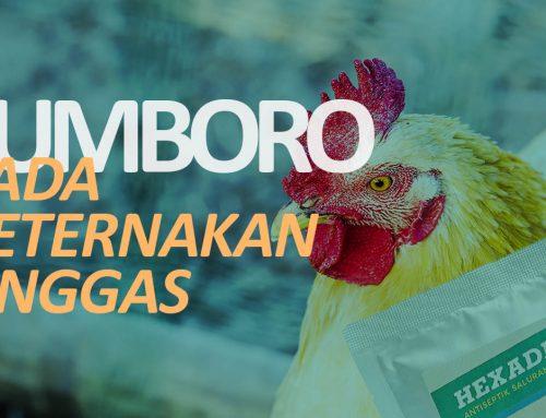 Lebih Gawat Serbuan Ayam Brazil atau Gumboro ?