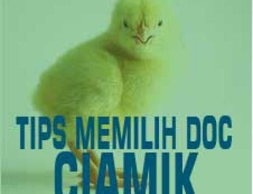 Tips Memilih DOC Ciamik!