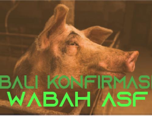 Bali Konfirmasi Wabah African Swine Fever