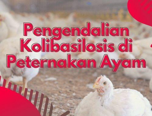 PENGENDALIAN KOLIBASILOSIS DI PETERNAKAN AYAM