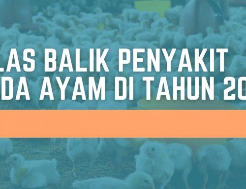 KILAS BALIK PENYAKIT PADA AYAM DI TAHUN 2020