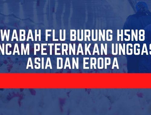 WABAH FLU BURUNG H5N8 ANCAM PETERNAKAN UNGGAS ASIA DAN EROPA